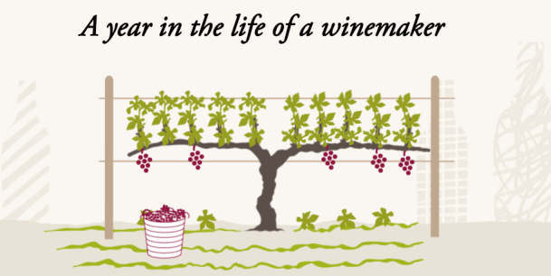 year in a life of bordeaux wine makers