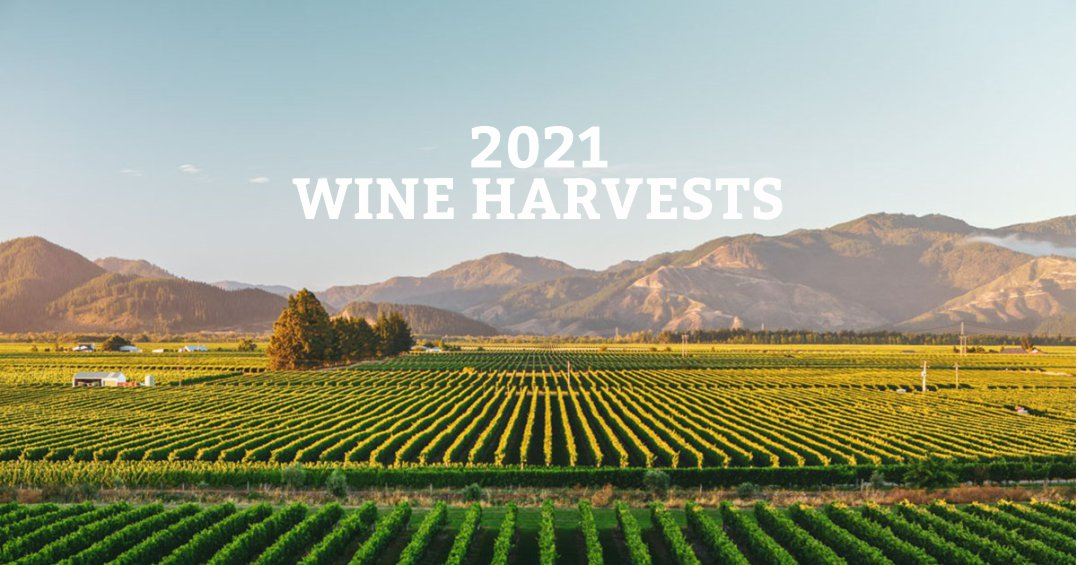 The 2021 Wine Harvests - The good and the bad