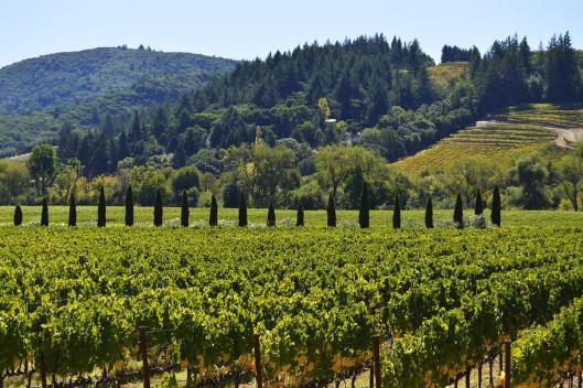 Learning With EWGA Wines - Australia