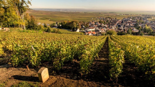 Learning With EWGA Wines - Champagne